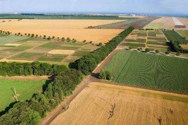 В Азербайджане вернули в повторное использование 255 тыс. га площадей для сельскохозяйственной деятельности